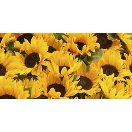 Sunflower and sorghum grain