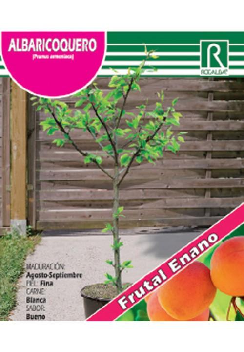 DWARF APRICOT TREE