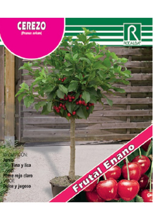 DWARF CHERRY TREE