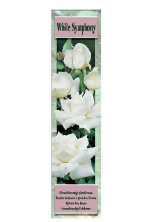 WHITE SYMPHONY -Blanco