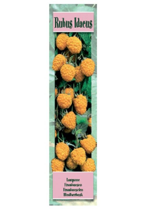 RUBUS IDAEUS FALLGOLD -Frambueso Amarill