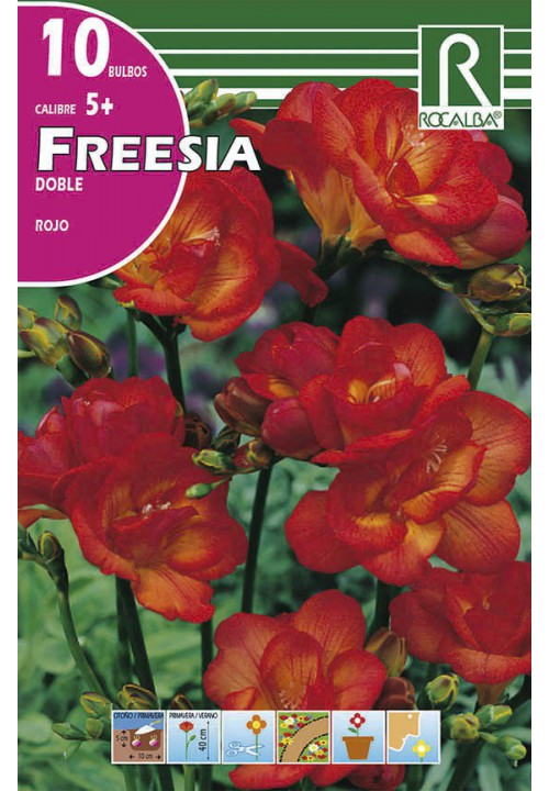 FREESIAS DOBLES -ROJO