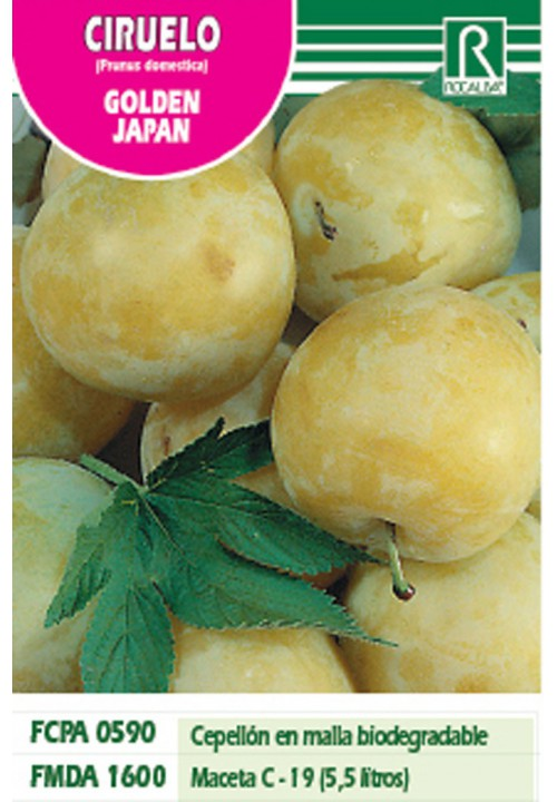 PLUM GOLDEN JAPAN -YELLOW-