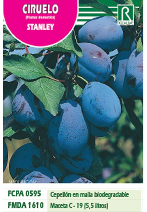 PLUM STANLEY -INTENSE BLUE-