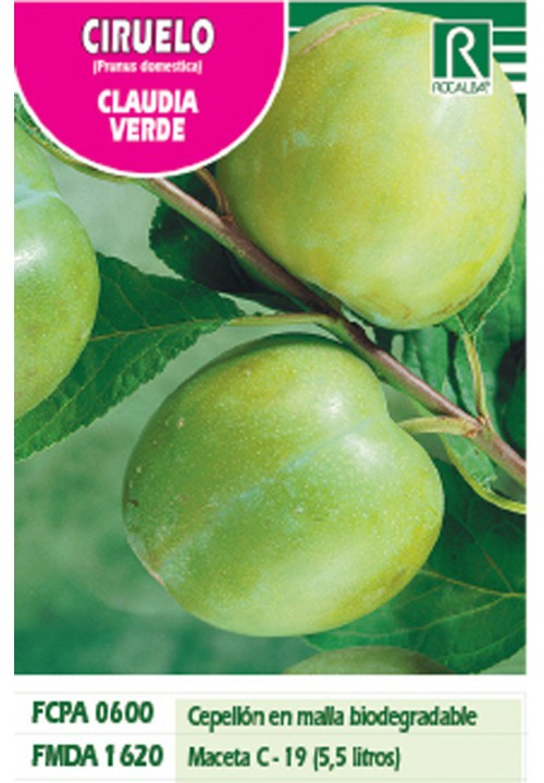 PLUM CLAUDIA VERDE -GREEN-