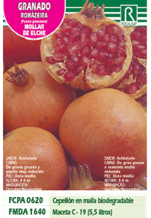 POMEGRANATE MOLLAR DE ELCHE -RED ON YELLOW-