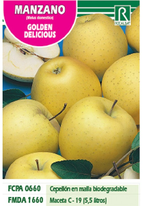 APPLE TREE GOLDEN DELICIOUS -YELLOW GREEN-
