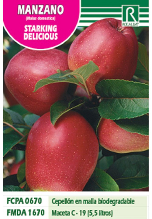 APPLE TREE STARKING DELICIOUS -SHINY RED-