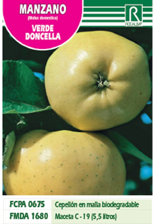 APPLE TREE VERDE DONCELLA -CREAMY WHITE-