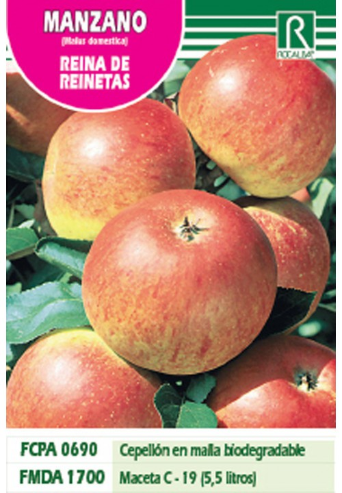 APPLE TREE REINA DE REINETAS -STRIPED YELLOW-