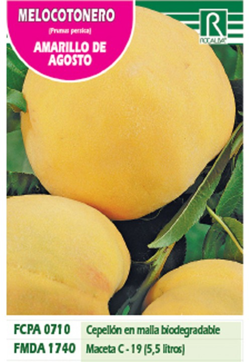PEACH TREE AMARILLO DE AGOSTO -YELLOW-