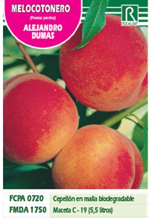 PEACH TREE ALEJANDRO DUMAS -STRONG RED-