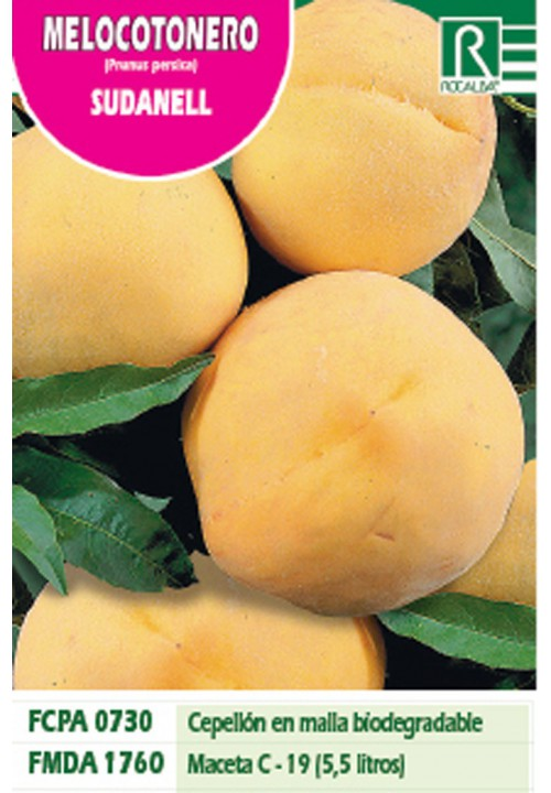 PEACH TREE SUDANELL -YELLOW RED-