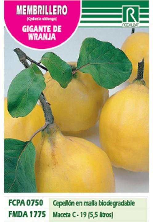 MEMBRILLERO GIGANTE DE WRANJA -amarillo-