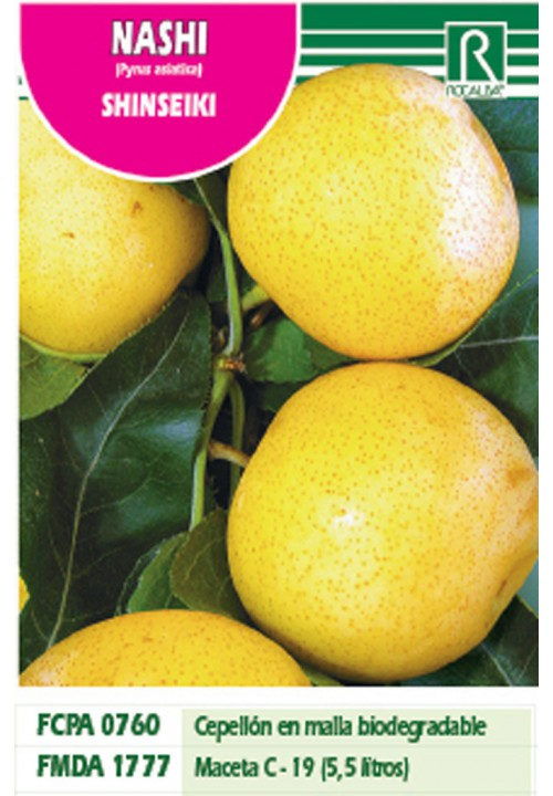 NASHI PEAR SHINSEKI -YELLOW-GREEN-