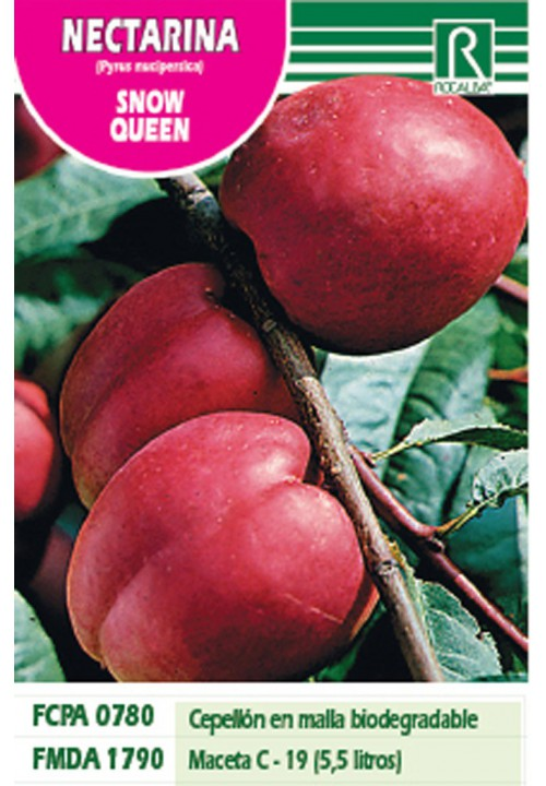 NECTARINE SNOW QUEEN -RED ON WHITE-