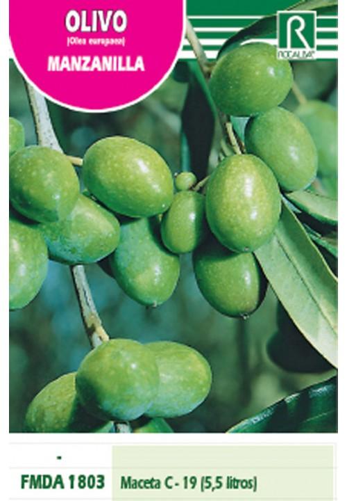 OLIVE TREE MANZANILLA