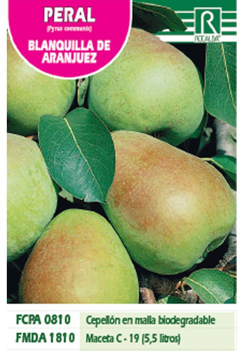 PEAR TREE BLANQUILLA DE ARANJUEZ -GREEN-