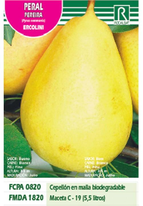 PERAL ERCOLINI -verde amarillo-