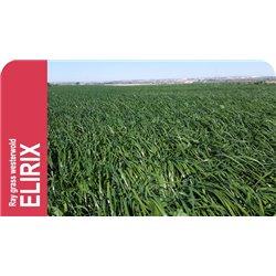 SEMILLA RAY GRASS WESTERWOLD ELIRIX