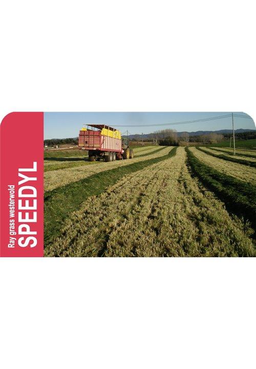SEMILLA RAY GRASS WESTERWOLD SPEEDYL
