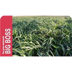 SEMILLA RAY-GRASS WESTERWOLD BIGBOSS