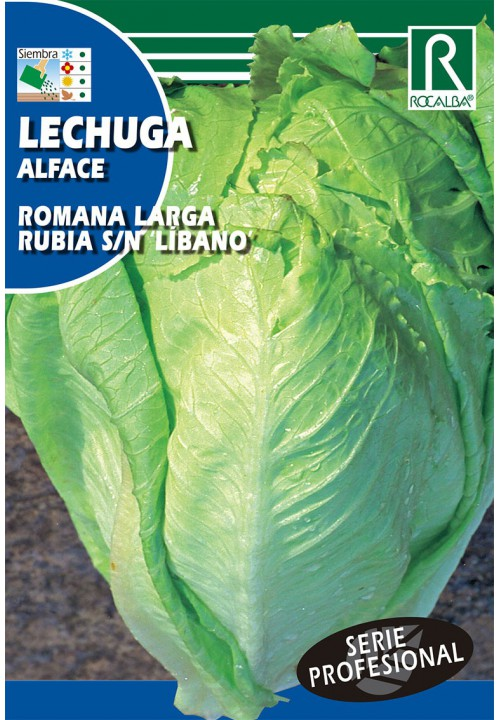 LETTUCE ROMANA LARGA RUBIA 'LIBANO'