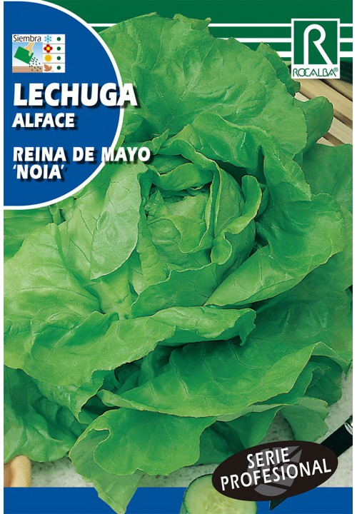LETTUCE REINA DE MAYO 'NOIA'