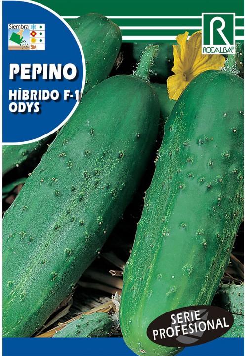 PEPINO HIBRIDO F-1 ODYS