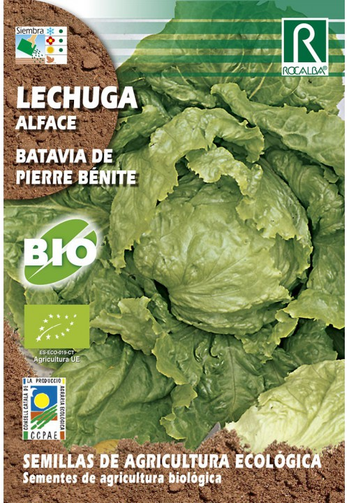 LECHUGA BATAVIA DE PIERRE BENITE