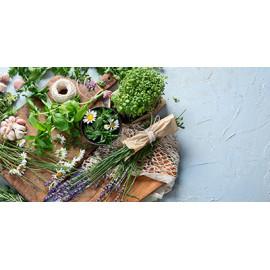 Plantes aromatiques et médicinales