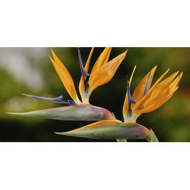 Plantes tropicales