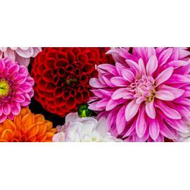Embalagens e granel de bolbos de primavera