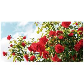 Roseiras e fruteiras em caixa