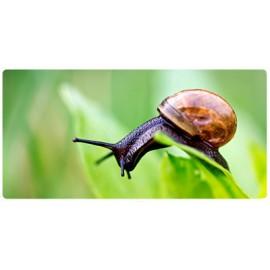 Fitosanitarios, fitosanitarios ecológicos y especiales